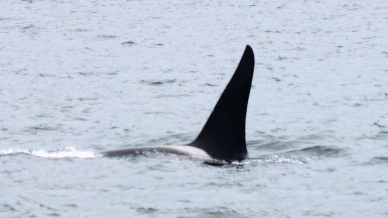 ホオジロザメが恐れる海の生き物って何か知ってる?
