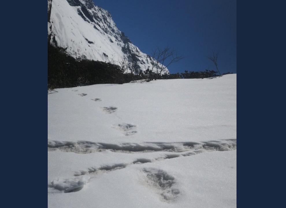 インド軍が「雪男の足跡」を公開。ネットがざわざわ