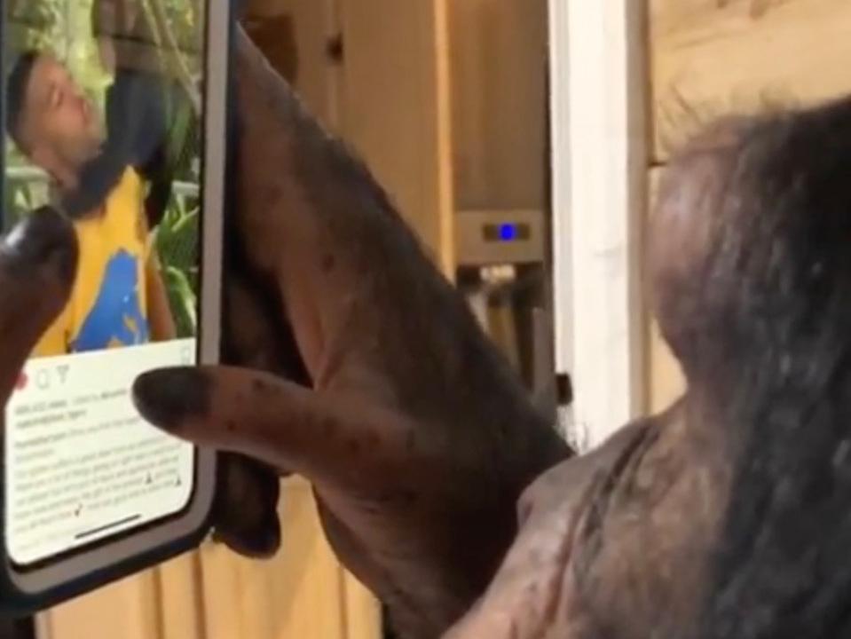 チンパンジーも使える。そう、iPhoneならね