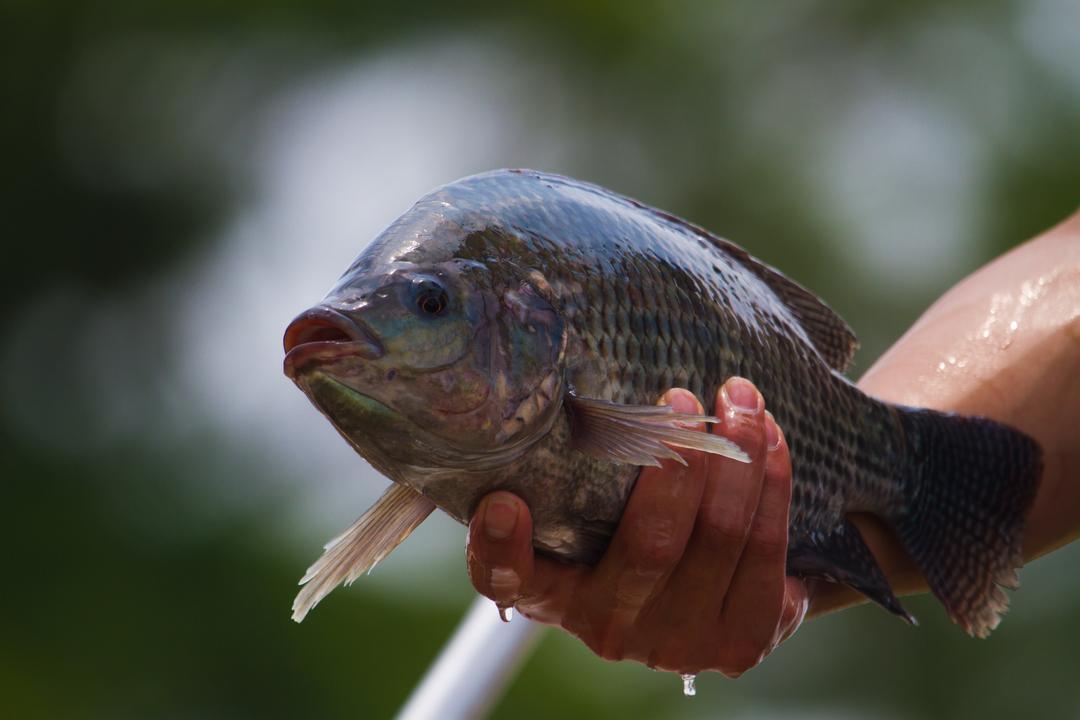 【閲覧注意】魚の皮が大火傷した犬を救う