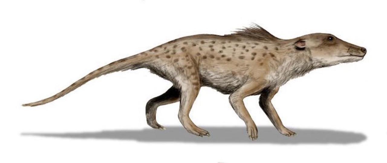 大昔、クジラには足があった…など、今じゃいろいろとありえない古代動物たち9選