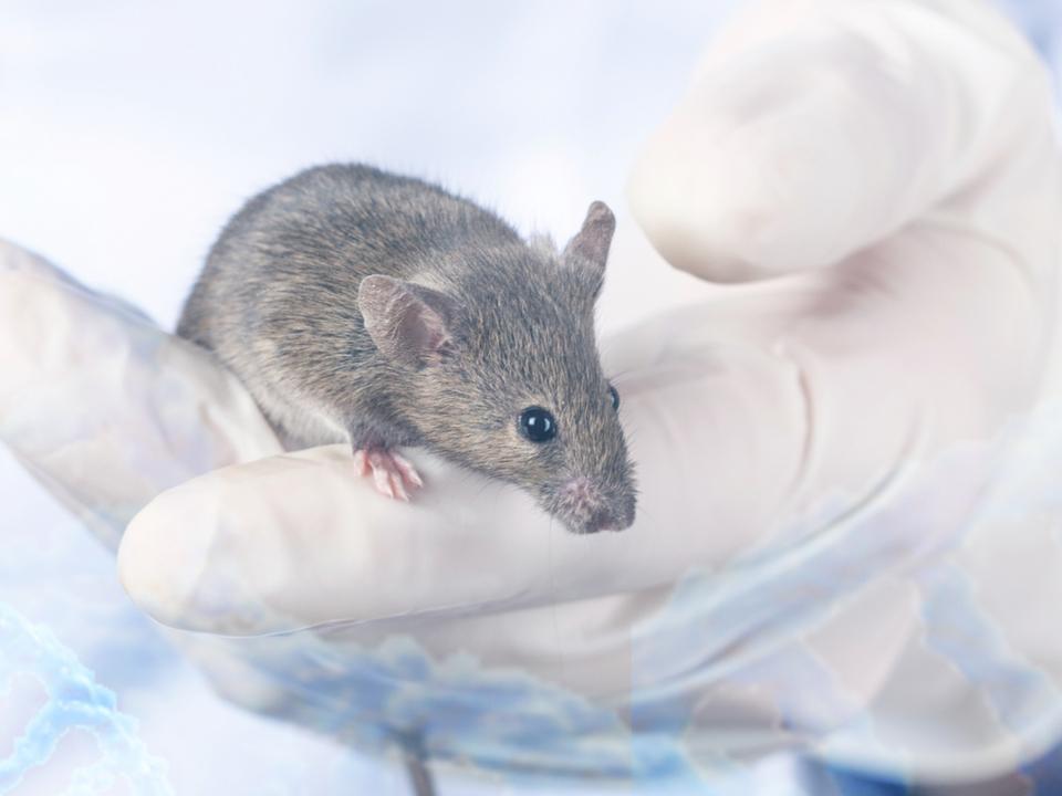 オスのマウスばかり使う実験が科学的研究をダメにしている
