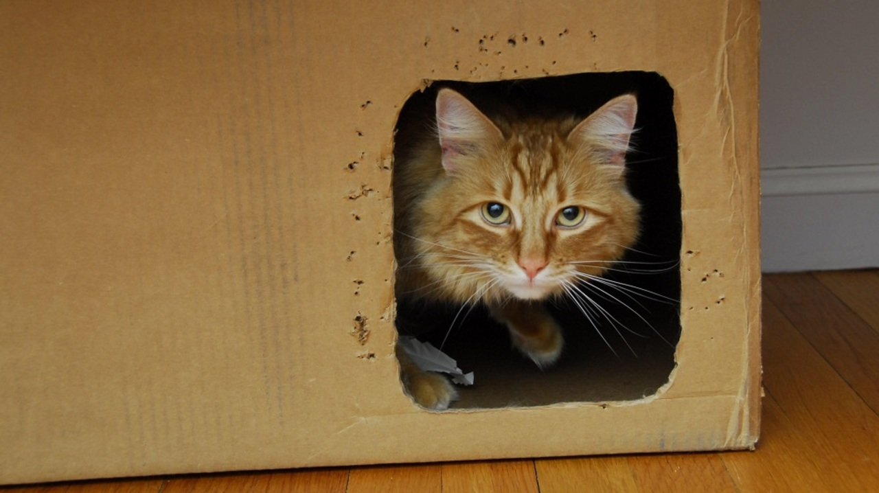 シュレーディンガーの猫、救われる