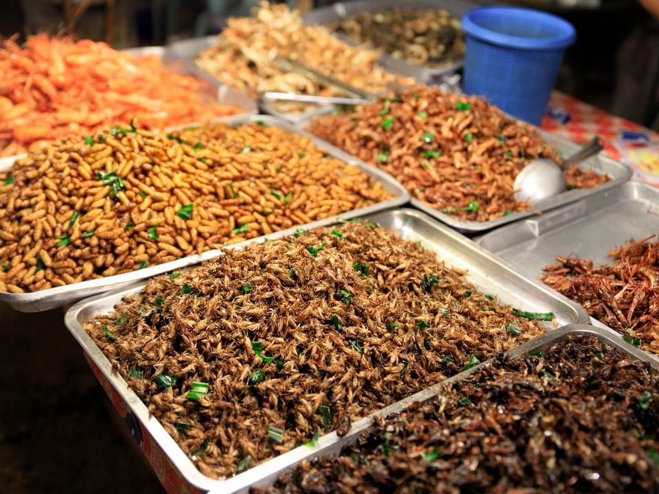 経済規模8600億円に? 昆虫食が当たり前になる未来