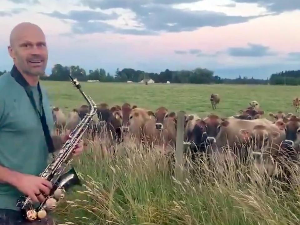 今日のホッコリ。YouTubeでサックス演奏を学んだパパが牧場で演奏してみたら牛たちが大感激!