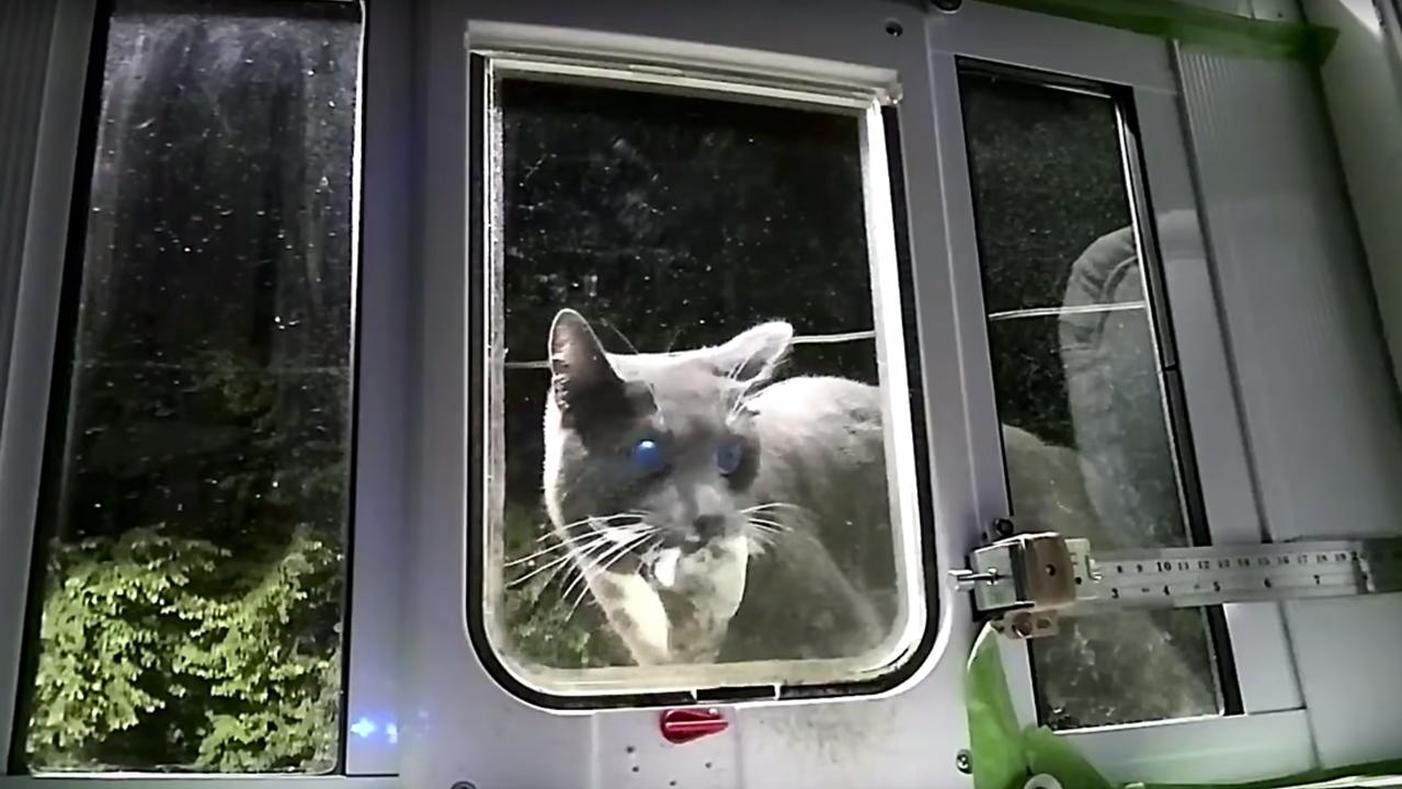 猫用AIドア。死んだ獲物をくわえて帰宅する愛猫をブローーーック!