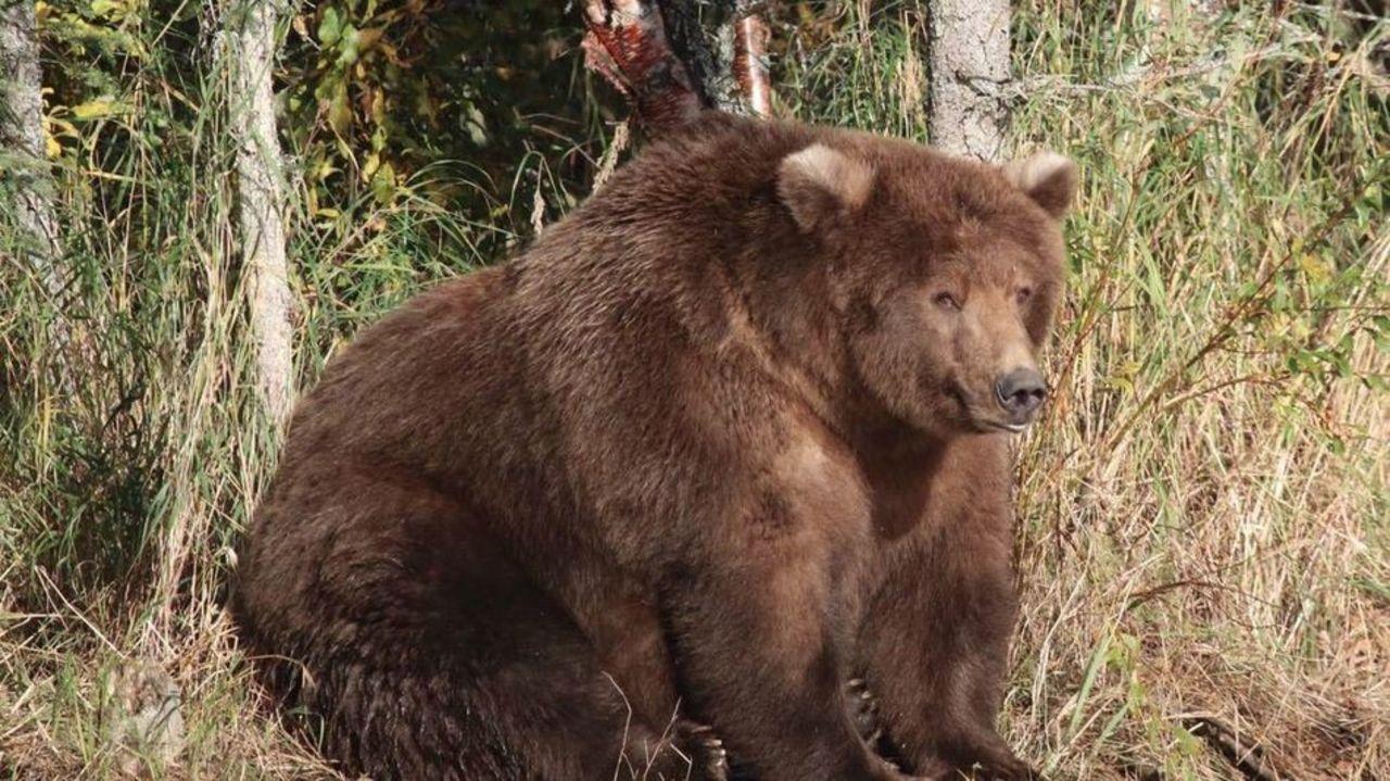 クマのハイシーズン到来。クマ・カムでクマの生活を覗き見しよう。あなたはどのクマがお気に入り?