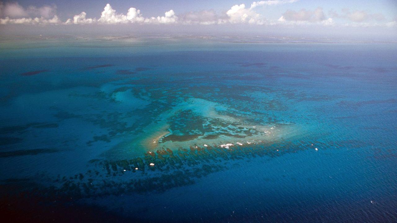 私たちのウンチがサンゴ礁を死滅させている…