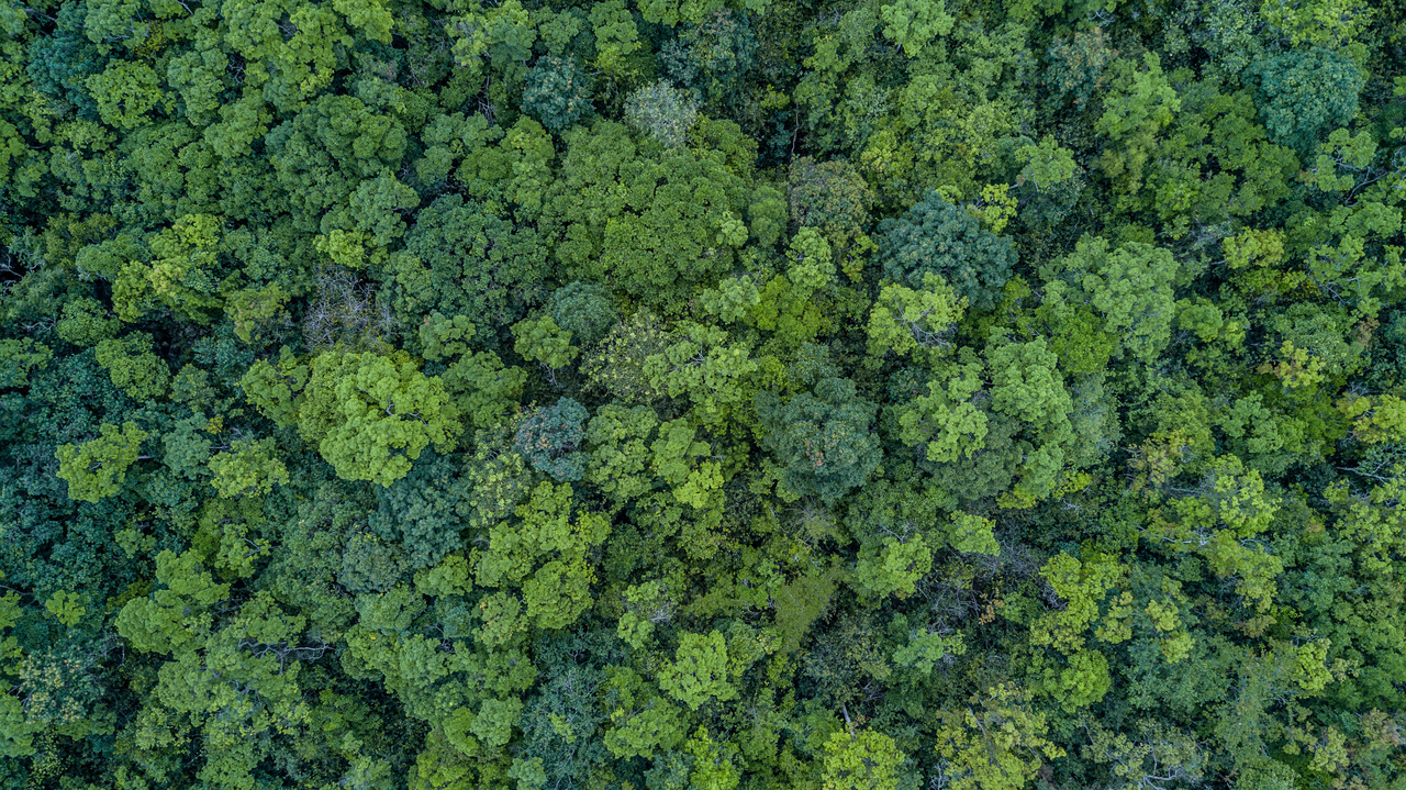 植樹の鬼となれ!森をアメリカ1個ぶん増やせば気候変動を緩和できるんだ