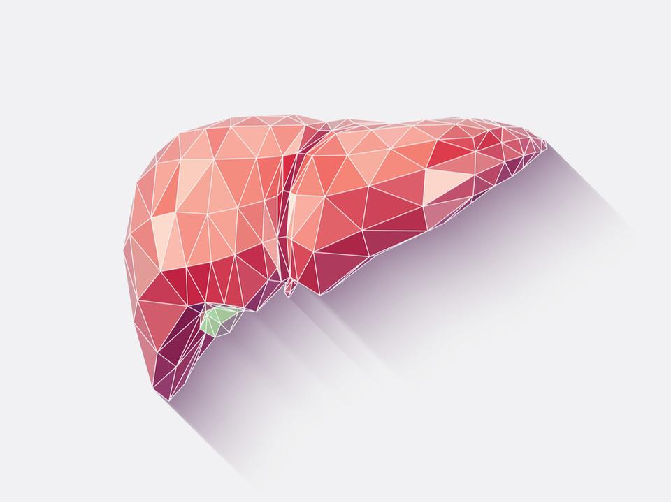 小さいけれどデキルやつ。医療界注目の「ミニ肝臓」ってどんな技術?