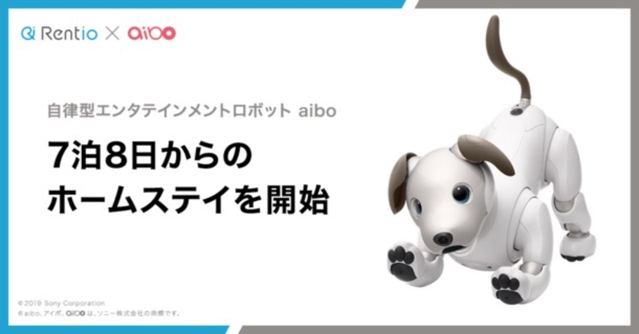 7泊8日から。aiboのホームステイ始まります