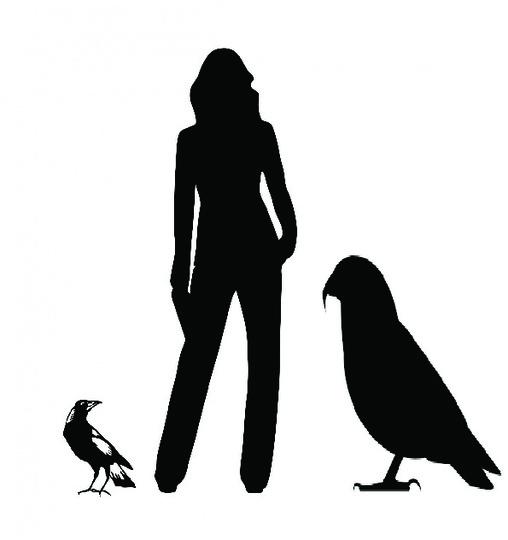190808_parrot2