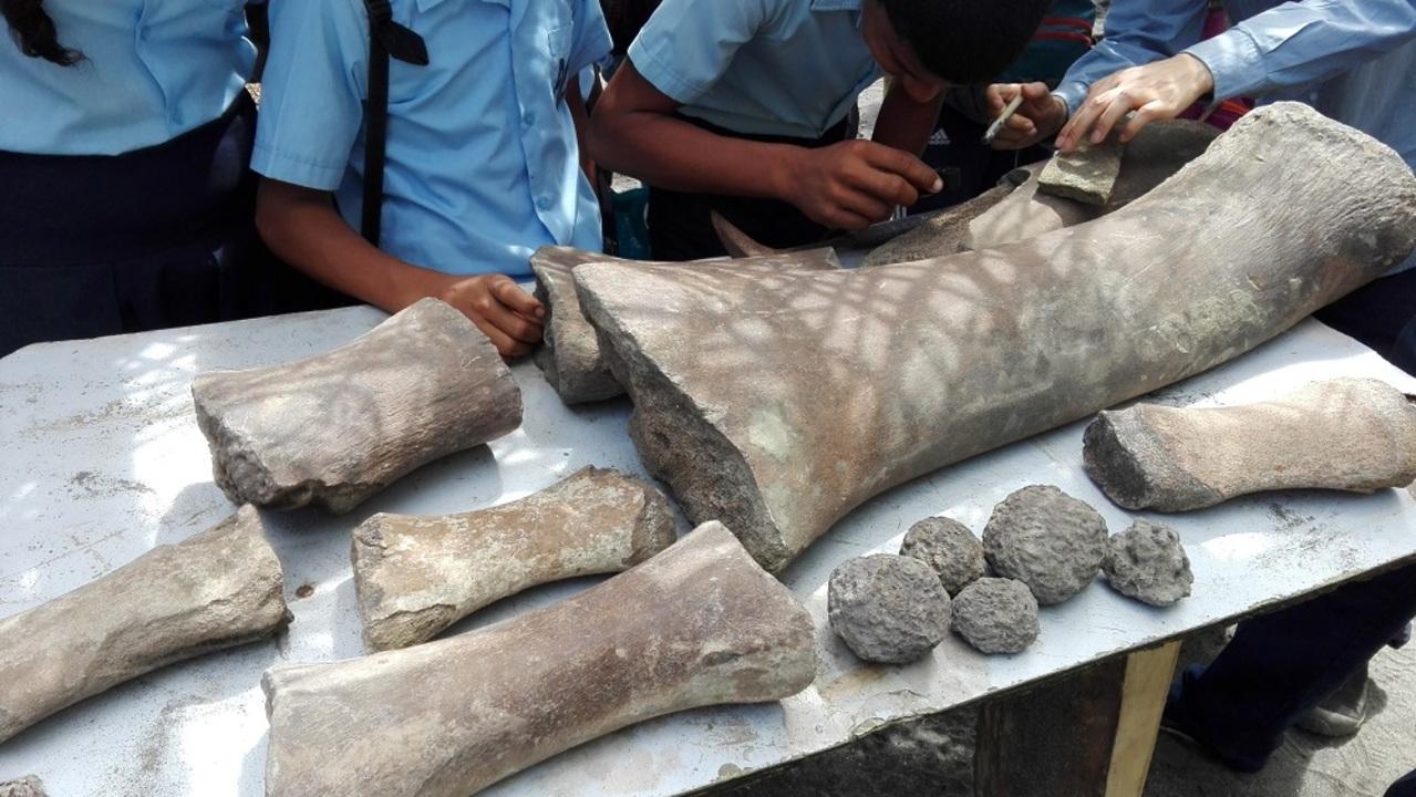 なんだこれ…古代クジラの化石から無数の咬み傷が見つかる