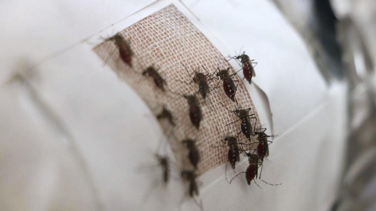 奇跡の素材グラフェンは、蚊を寄せ付けない効果もあった!
