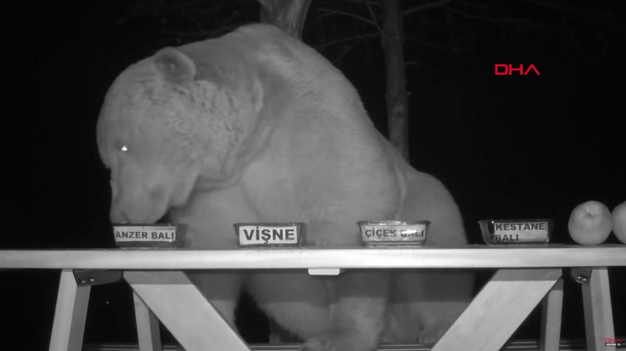 トルコの養蜂家おじさん、熊のはちみつ味覚テストを行なう。でも問題はソコじゃない