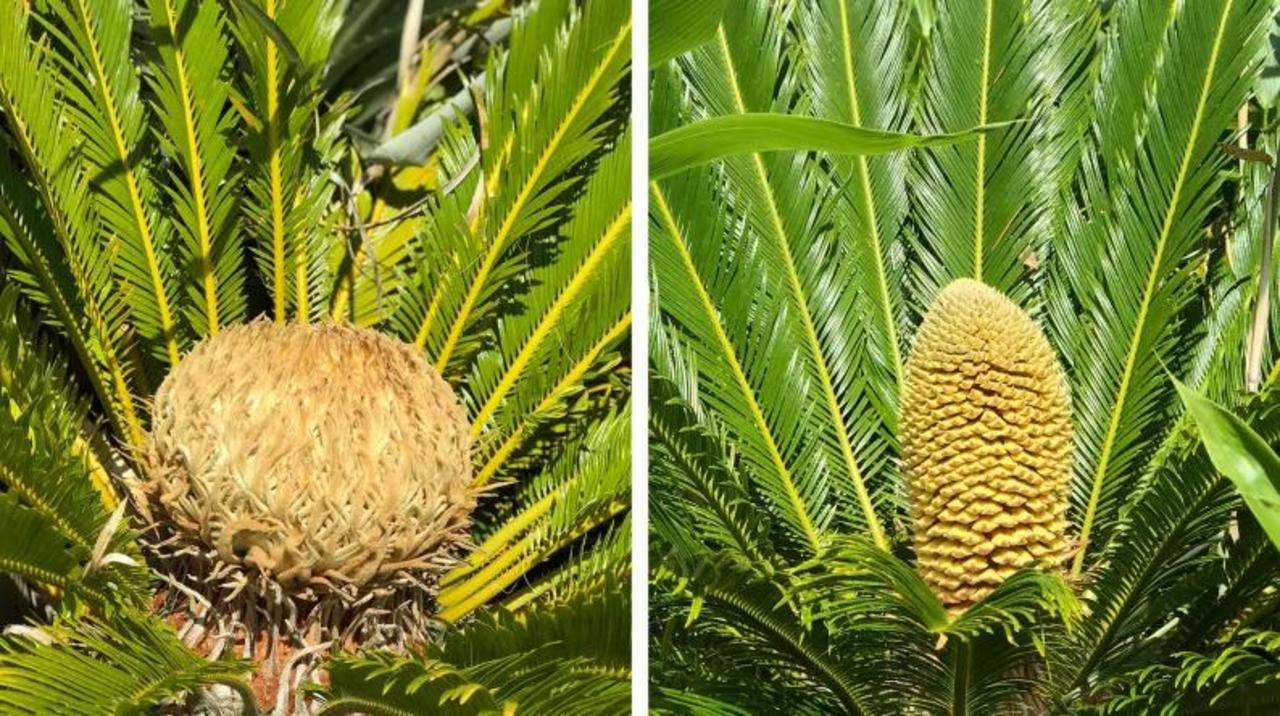 温暖化のせい? 見られるはずのない植物の繁殖が北の地に…