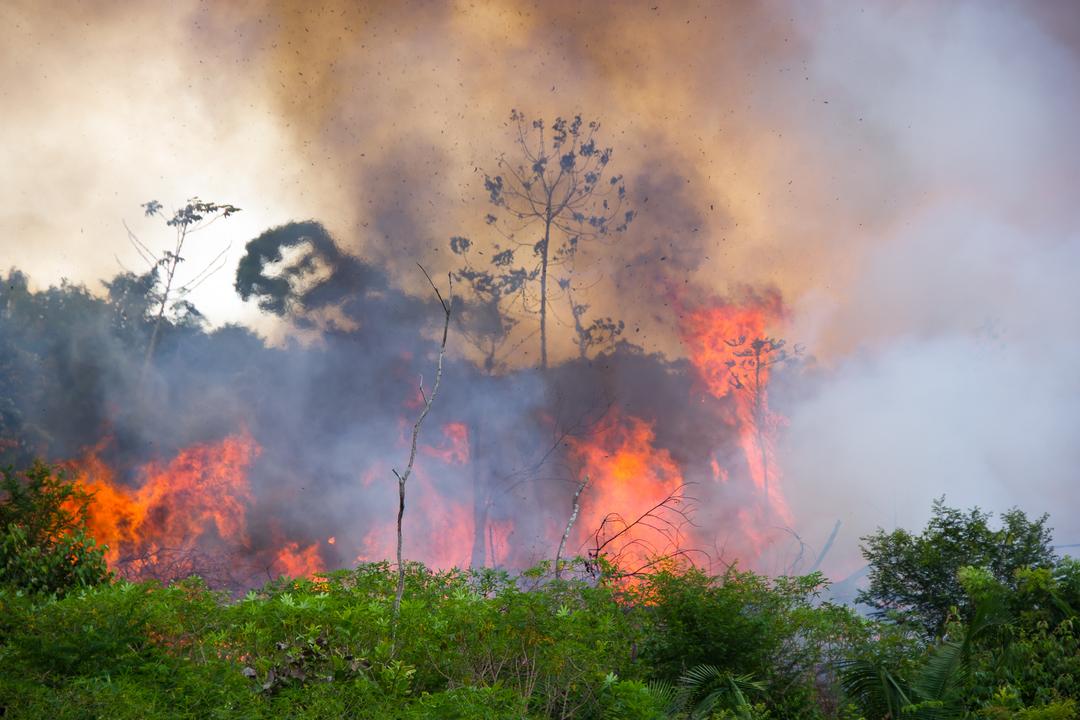 2019年、アマゾンの森林火災が急増