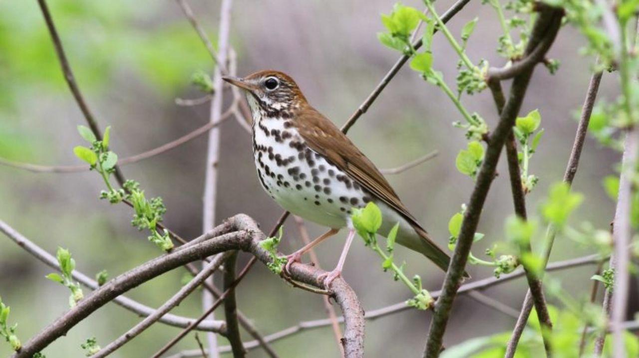 北米では鳥の数が3割も減っている。これは非常に良くないこと