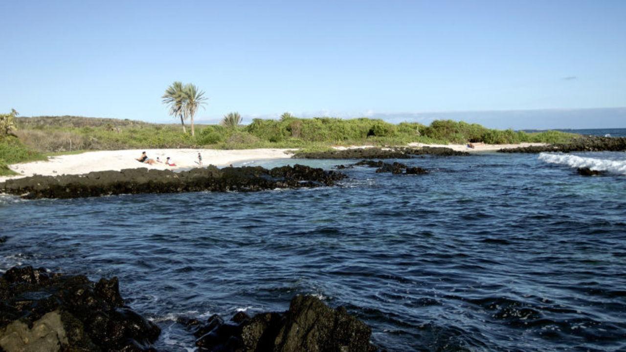 ガラパゴス諸島の入島料が大幅に値上げされるかも