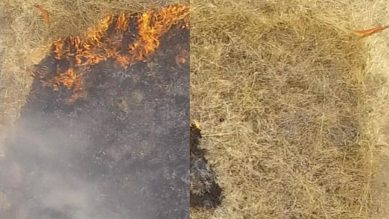 山火事にスタンフォード大学発の新対策。事前にスプレーで火事発生を抑える