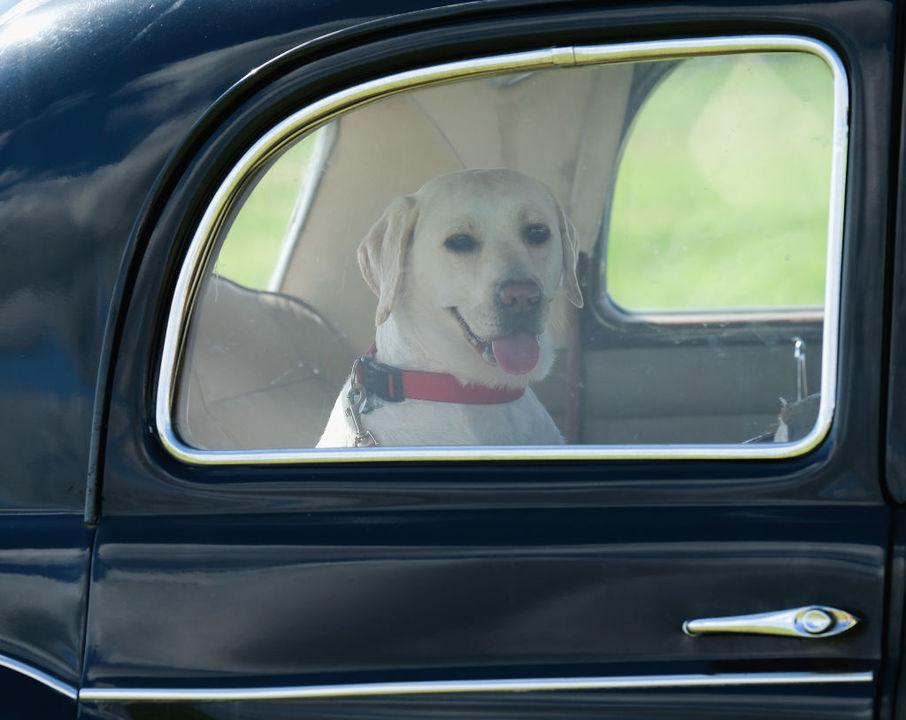 Uber Petでペットも一緒に乗れるように。有料だけど
