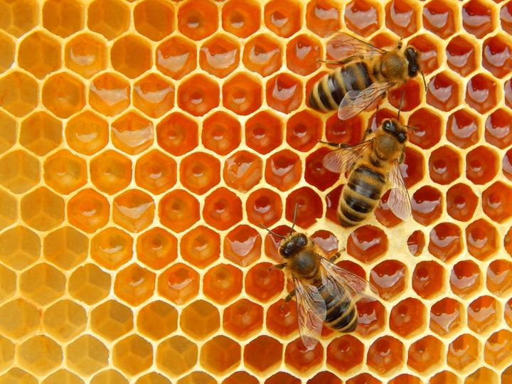 20191031-super-bees-top