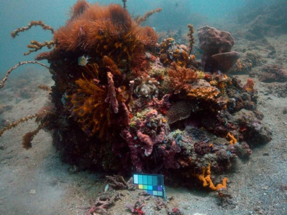 MITと海洋学者がタッグを組み、水中写真をクリアに処理するアルゴリズムが完成
