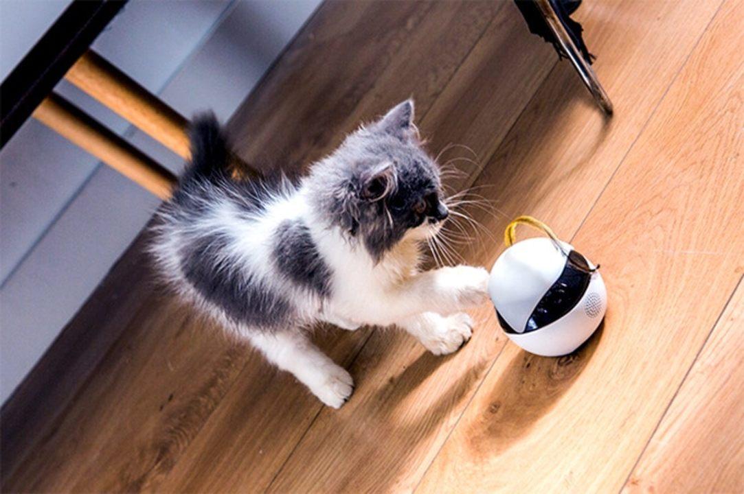 猫かわいすぎてサポート4,000%超え! 猫用スマートロボット「Ebo」