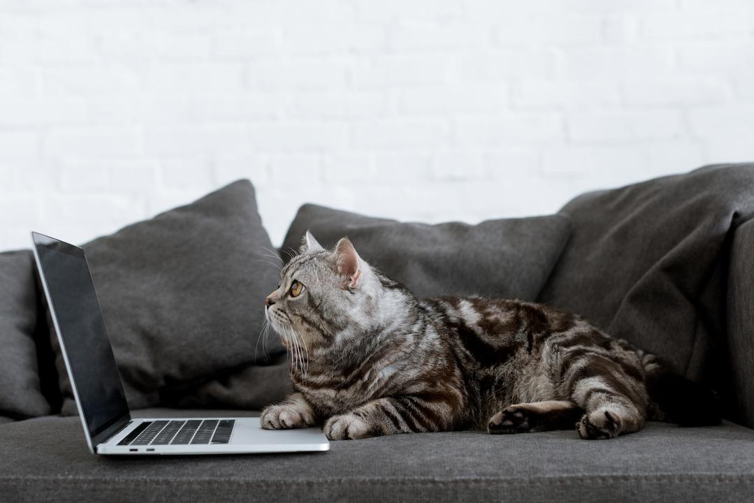 【Amazonサイバーマンデー】かさばるペット用品をまとめて配達、お得にゲット。私もお猫さまに買っちゃうニャン