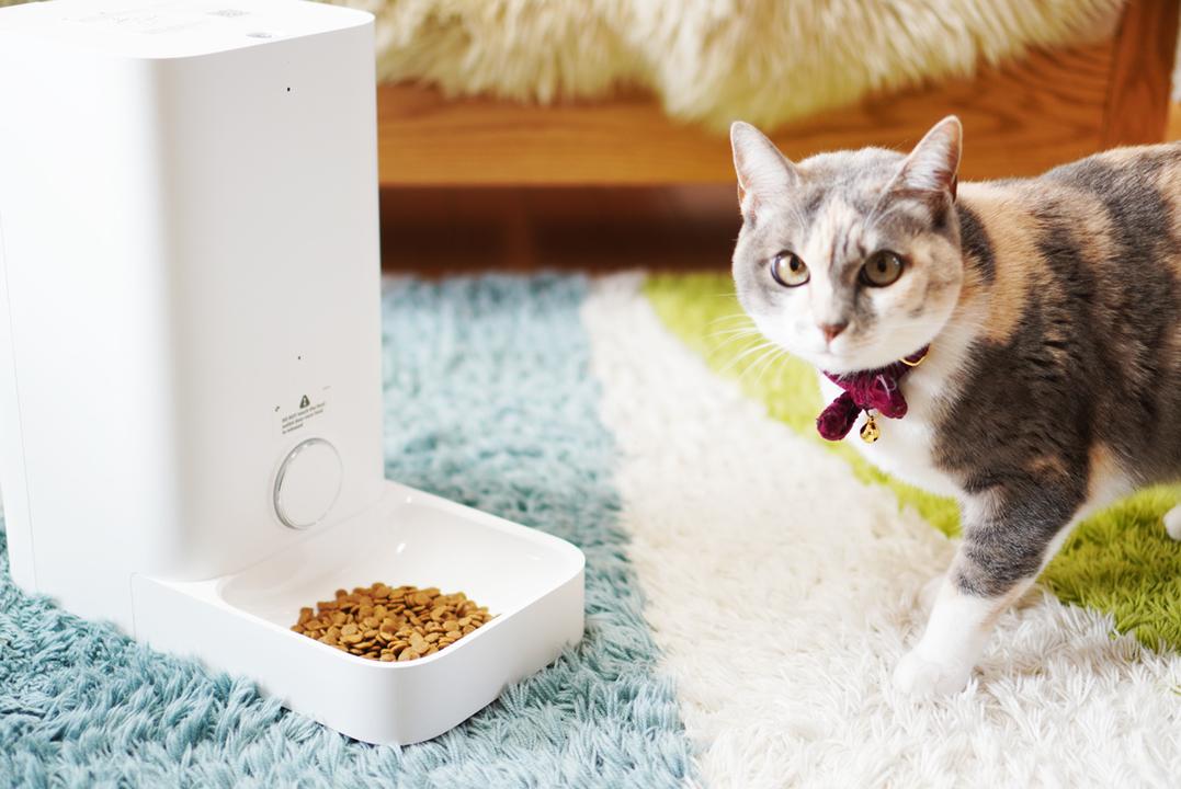 ペットのお世話も遠隔操作の時代!? 自動給餌器「FRESH ELEMENT ミニ」を愛しの猫ちゃんと使ってみた