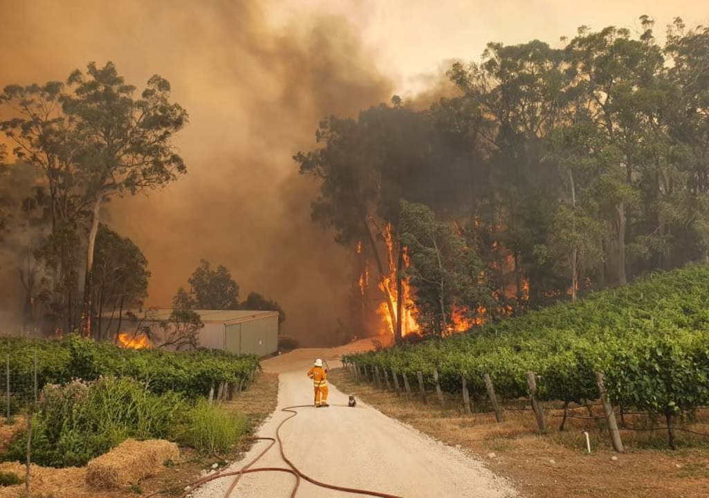 「燃え盛る炎をみつめる消防士の隣にコアラ」の写真は、気候非常事態を完璧に捉えた1枚