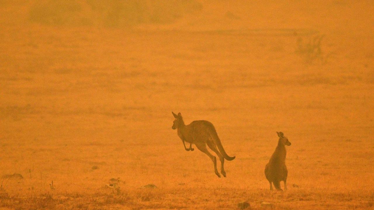 推定12億5000万匹の動物が犠牲に。オーストラリアの森林火災が本当にやばい