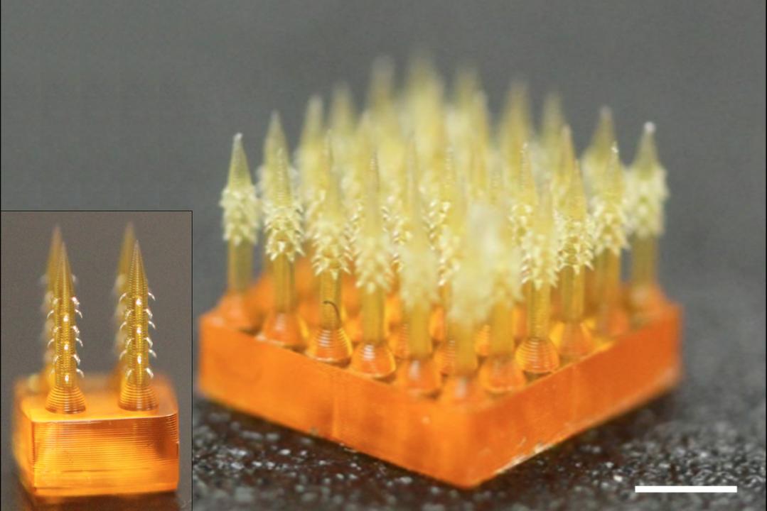 4D印刷!? 害虫の針のように返しがある極小針は薬を内包し体内で溶ける