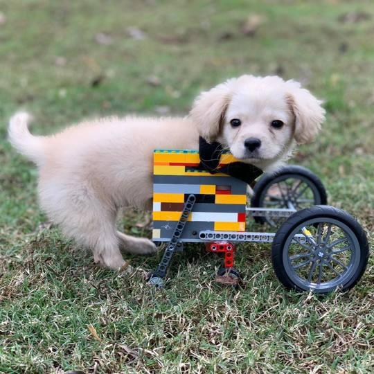 12歳の少年、前脚のない子犬にレゴで車椅子を作る