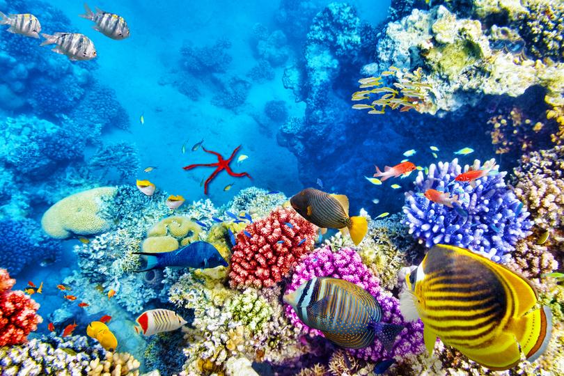 核戦争は、海洋生物にもよくないらしいよ…