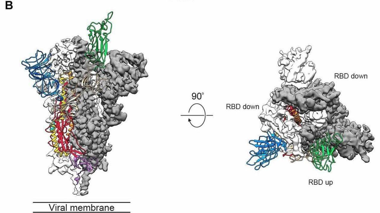 打倒新型コロナウイルス。原子レベルの姿から弱点を探せ