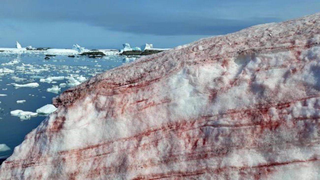 南極に、血の色の雪が積もる…研究者は「温暖化を引き起こしかねない」と危惧