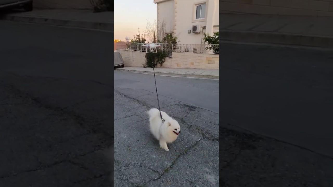 外出できないけど犬の散歩はしたい→ドローンにさせよう!