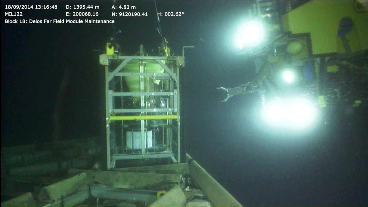 深海魚は季節的に移動していることが明らかに! でも海洋油田との関係が気になる