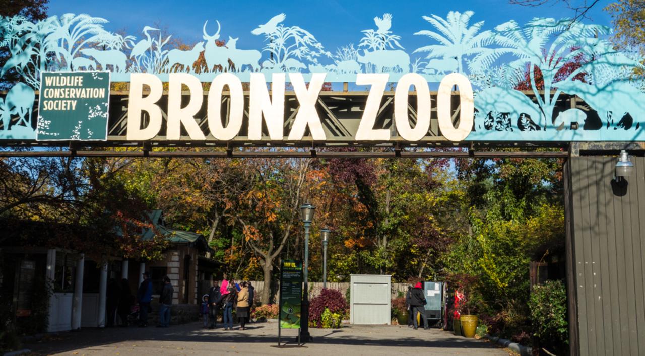 ブロンクス動物園のトラが、新型コロナウイルス陽性反応。他の大型ネコ科動物にも呼吸器系の症状