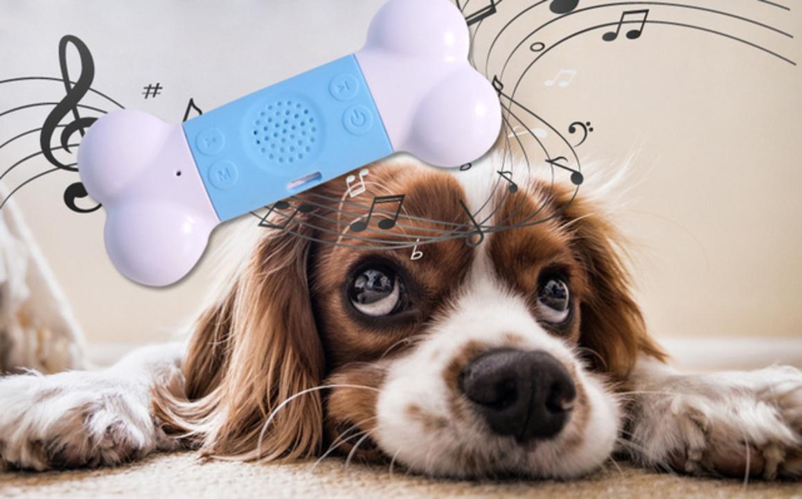 癒やし、癒やされ。愛犬の心を穏やかにする楽曲が入った、犬用音楽プレーヤー