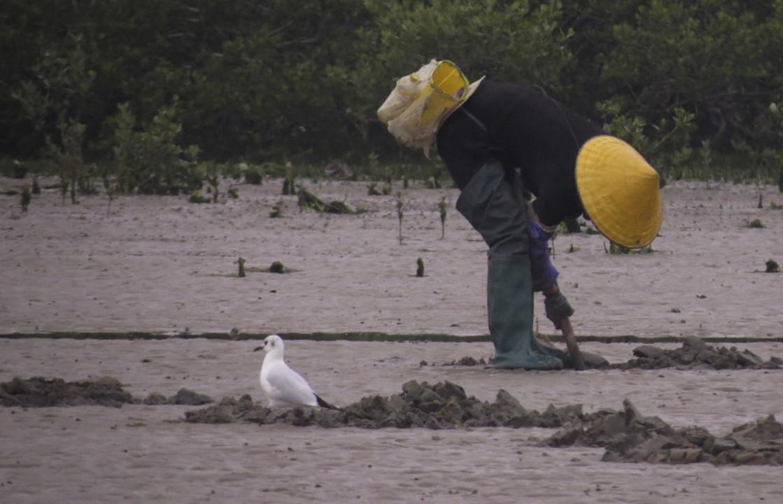 漁師スタイルなら、鳥を近くで撮影できる? 鳥は服装で「危険度」を見分けてるっぽい