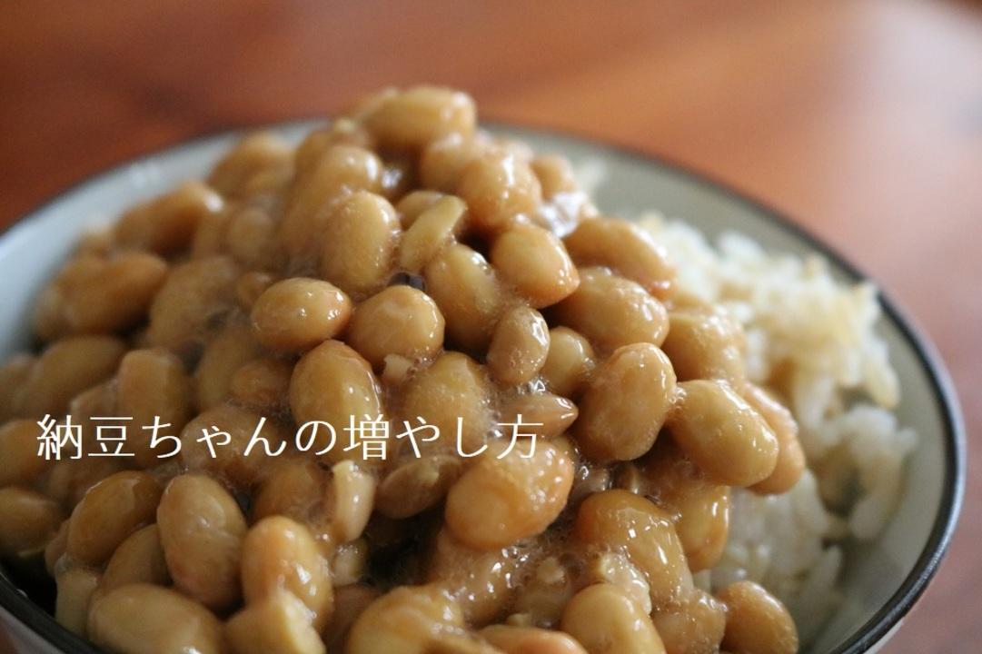 自宅でできる、納豆ちゃんの増やし方