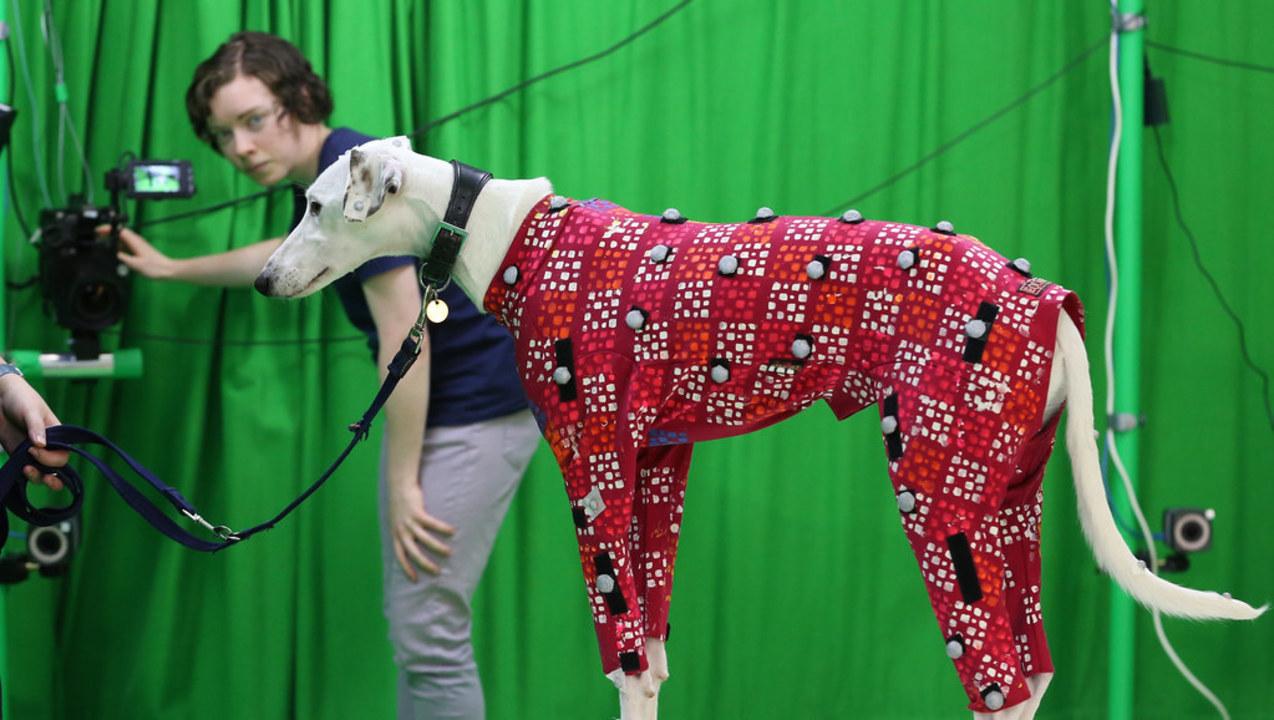 映画やゲーム、動物病院にも。カメラ1台でできる犬用モーション・キャプチャー