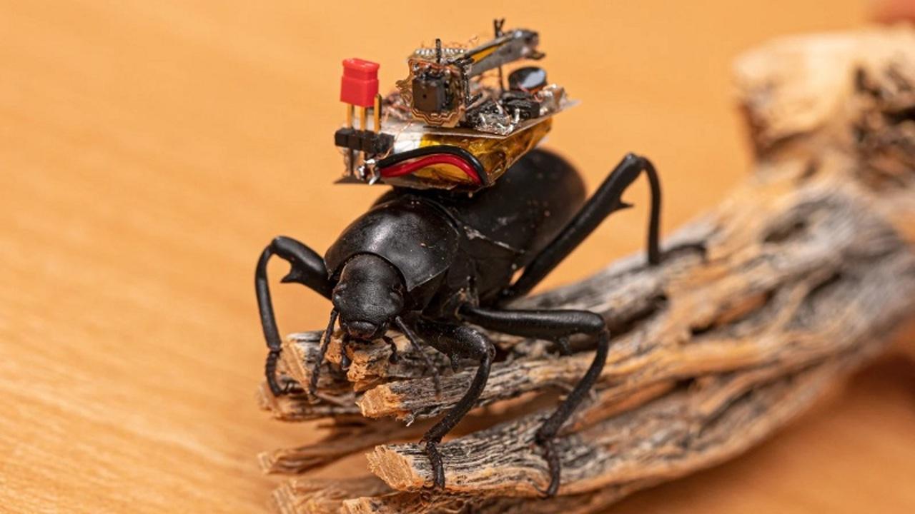 カブトムシのVLOGが撮れる超小型カメラ