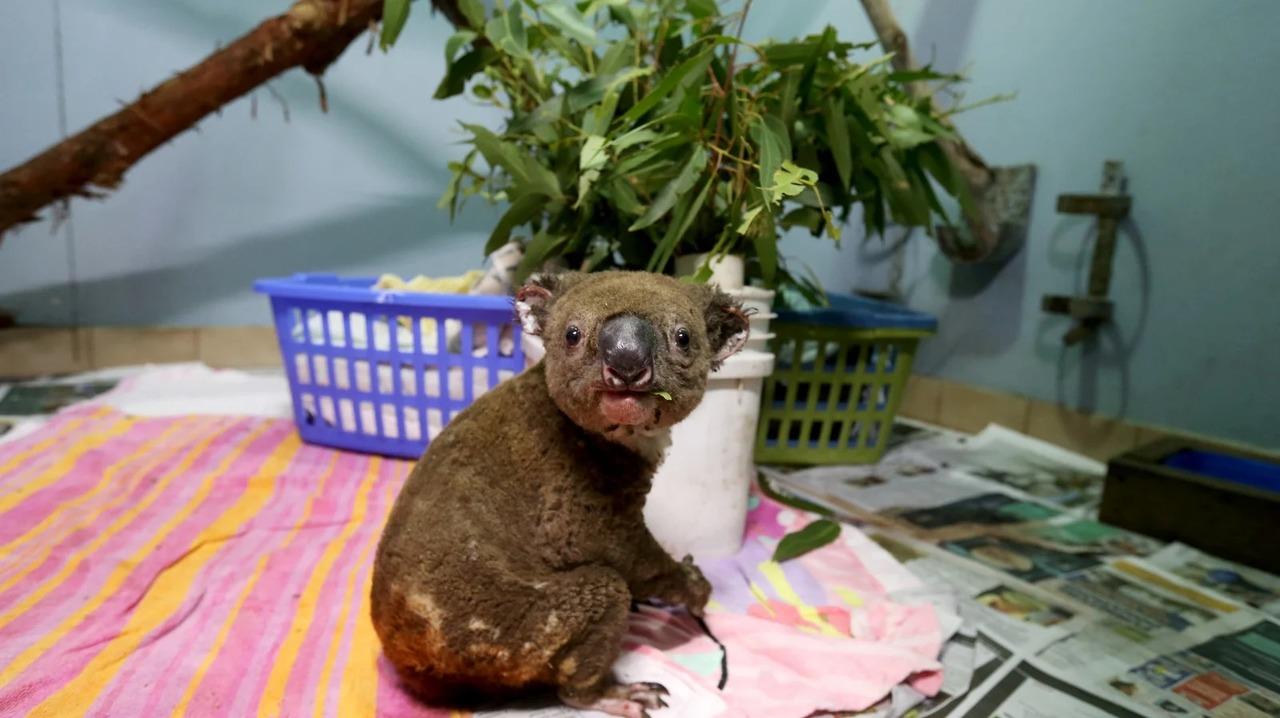 オーストラリアの森林火災、想定の3倍=30億匹近くの動物が死亡または住処を追われていた