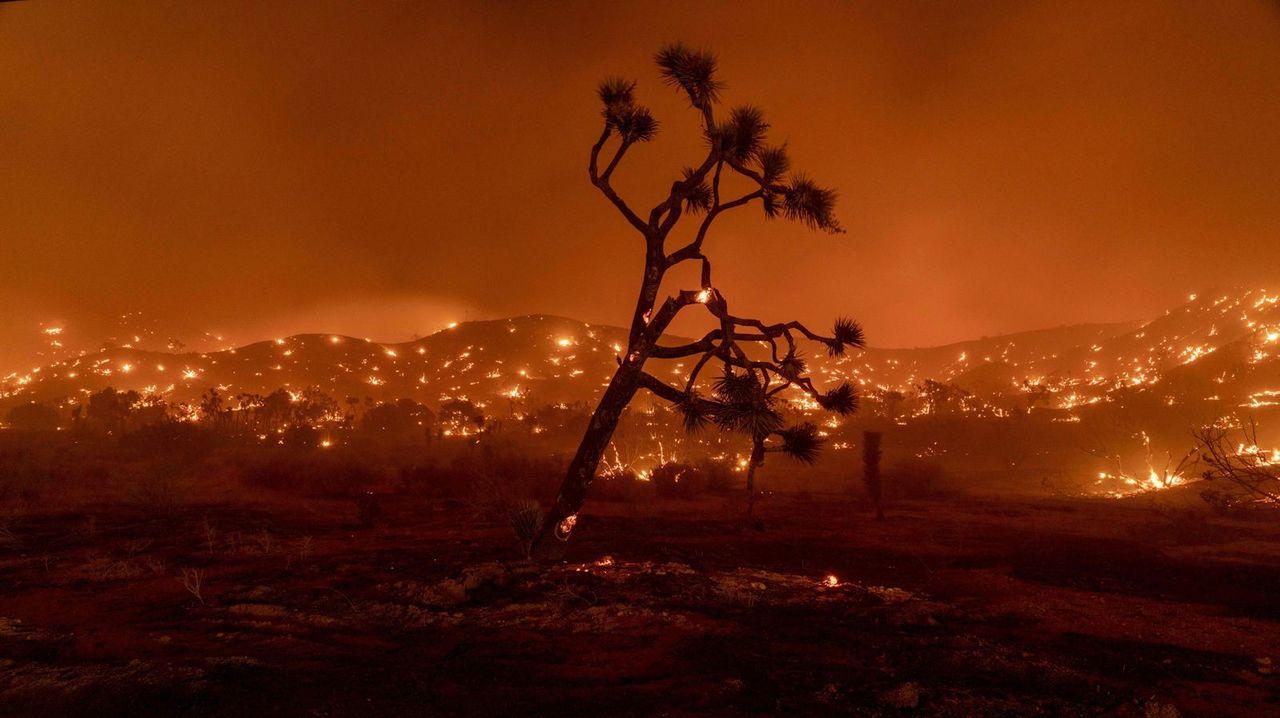 気候変動で絶滅の危機。カリフォルニア州、ジョシュアツリーの保護に乗り出す