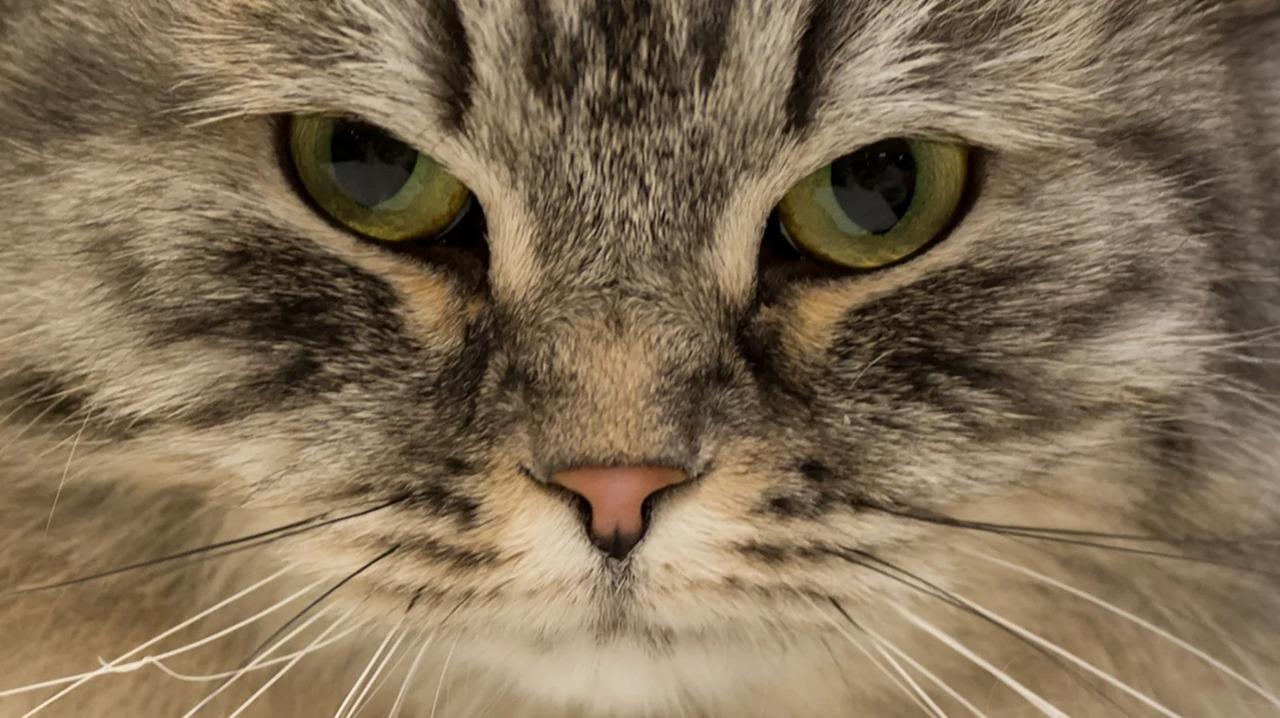 初対面のネコに好きになってもらえる方法!秘密は「ニャンコまばたき」です