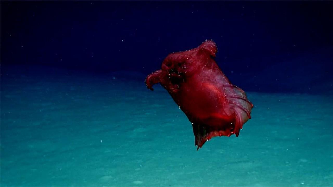 夢か悪夢か。深海にひそむ異形の生きものたち