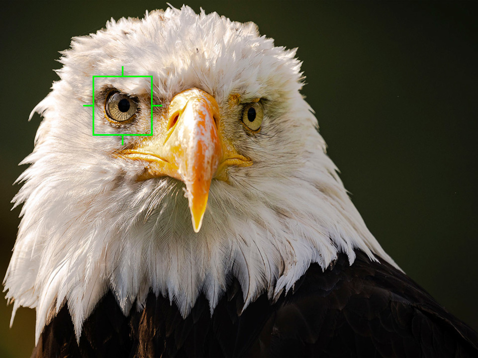 遠くのあの瞳をロックオン。オリンパスが「鳥認識AF」対応のファームウェアを12月3日公開